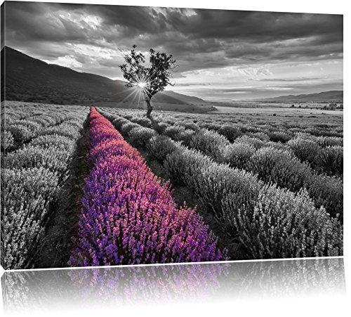 Lavendelfeld mit einsamen Baum schwarz/weiß Format: 80x60 auf Leinwand, XXL riesige Bilder fertig gerahmt mit Keilrahmen, Kunstdruck auf Wandbild mit Rahmen, günstiger als Gemälde oder Ölbild, kein Poster oder Plakat