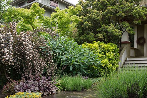 3-pack-of-mixed-shrubs-grown-by-lanacshire-plants-garden-ready