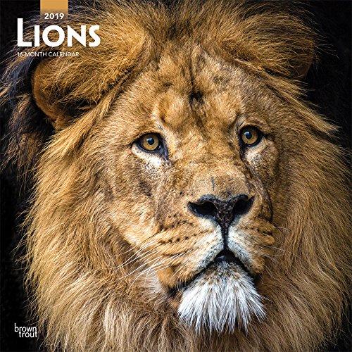 Lions - Löwen 2019 - 18-Monatskalender: Original BrownTrout-Kalender [Mehrsprachig] [Kalender]