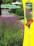 Lavendel 'Hidcote Blue' blau, attraktive Duftpflanze, Schmetterlingsweide, Staude ( mit Stecketikett) 'Lavendula angustifolie'