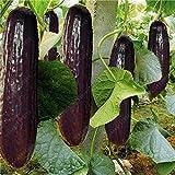 100 pcs rares concombre noir violet graines de concombre longues japonais pour les légumes graines de jardin à la maison en bonne santé des plantes non-OGM