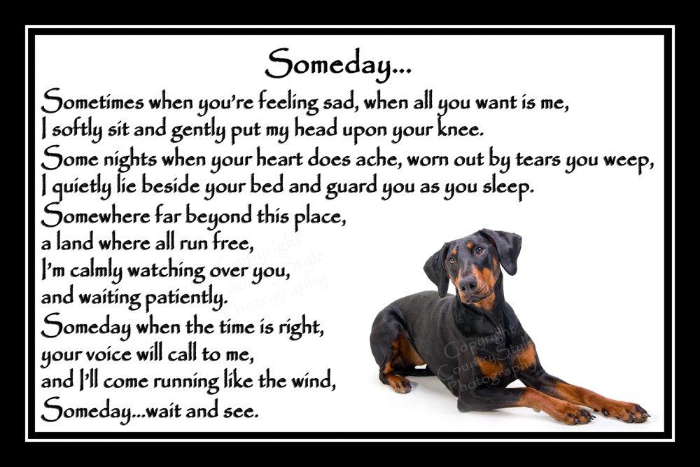 Doberman Pinscher Pet Dog Bereavement Memorial Print (unframed) – Someday