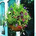 Gardman Hängeampel Rustikal von Gardman auf Du und dein Garten