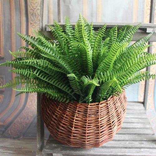 Kicode 7 Branchen Grüner Spargel Farn Grass Pflanze Blume Bonsai für Garten Saftiges Gras Wüsten-Landschaft Garten nette