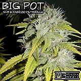 Big Pot (Twitchin Skratch Mix)