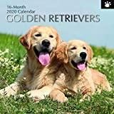 The Gifted Stationery GSC19496 Wandkalender 2020 Golden Retrievers