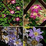 Rosepoem 100pcs colores mezclados Maravillosas...