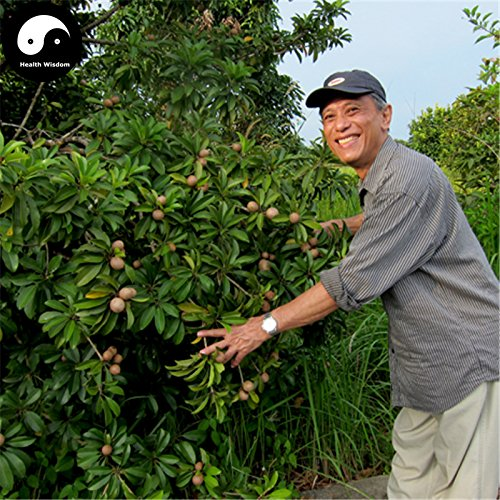 Kaufen Rare Sapodilla Obstbaum-Samen 120pcs Pflanze Herz Obst für Breiapfelbaum