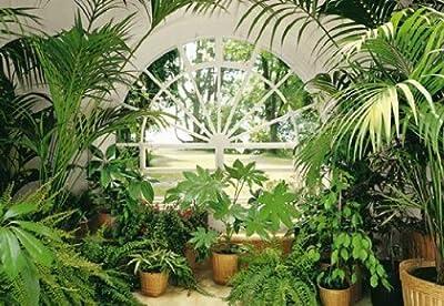 1art1 40566 Pflanzen - Wintergarten 8-teilig, Fototapete Poster-Tapete (368 x 254 cm) von 1art1 bei TapetenShop