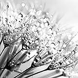 artissimo, Glasbild, 20x20cm, AG4056A, Pusteblume IV, Blumen-Bild, Bild aus Glas, Moderne Wanddekoration aus Glas, Wandbild, Schwarz-Weiß