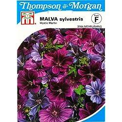 Thompson & Morgan AGT03164 Malve sylvestris Mystic Merlin (Malvesamen)