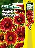 Korkadenblume 'Fackelschein' rot/ gelb , Farbenprächtig, lang blühend, zum Schnitt geeignet, Staude ( mit Stecketikett) 'Gaillardia aristata'