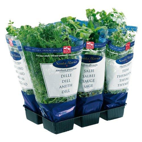 Obst & Gemüse Bio Küchenkräuter im Topf - 8 Stück (1 x 1 Stk) Küchenkräuter