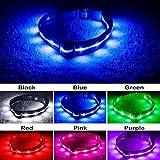 Blazin' Bison Sicherheit führte Hundehalsband - USB wiederaufladbaren mit Wasserdicht Blinken große Hellblau