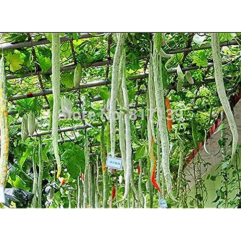 100 Cipolla rossa creole Grande vegetale Semi ~ ~ organico, Grande verdure sano, farà sembrare più giovane