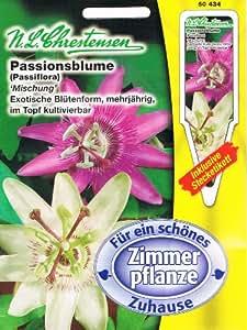 Passionsblumen Mischung Passiflora spec. Zimmerpflanze