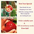 40 Stück Regenbogen-Mais-Saatgut NO-GMO Glass Gem Mais Gemüsesamen für Hausgarten 300 Erdbeere für Geschenk senden von SVI bei Du und dein Garten