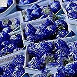 Semi di fragola di colori rari Semi nutrienti di frutta e verdura - 100 pezzi