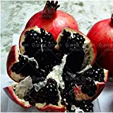 PRODOTTI HOO - 50pcs / bag nero melograno semi casa piantare semi delizioso frutto Albero da frutto semi molto grande e dolce per la casa della pianta di giardino a buon mercato!