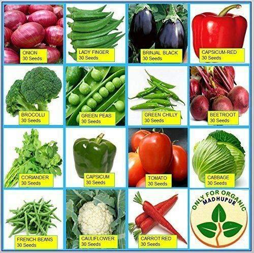Combo von fünfzehn Winter-tchen Garten Hybrid Seeds! Starten by Farmerly Hybrid-combo