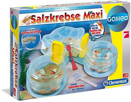 galileo salzkrebse Galileo- Salzkrebse Maxi, 1 Stück