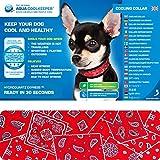 Aqua Coolkeeper Kühlendes Halsband für ihren Hund, Größe XS 16-19cm x 2,5cm, Farbe Red Western