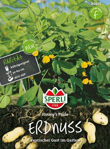 Tropica - Erdnuß (Arachis hypogaea) - 8 Samen