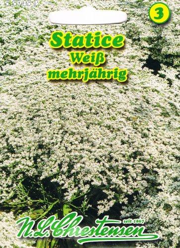 Statice weiß 'Limonium tataricum'Trockenblumen mehrjährig