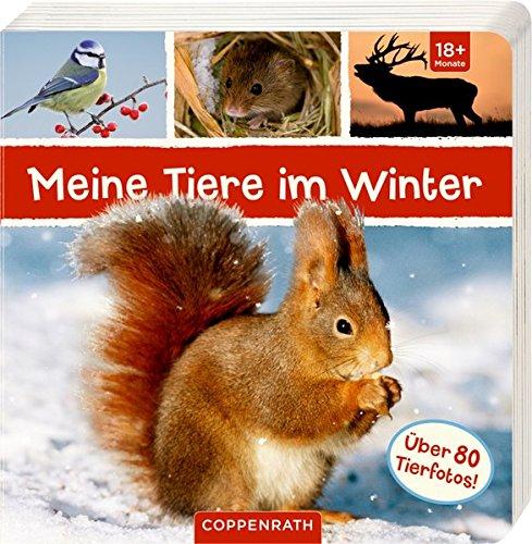 Tiere Winter im