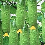 good01 200 Stücke Gurkensamen, Gemüse Beizen Samen, Nahrhafte Gemüse Obst Garten Hof Pflanzen Gurkensamen