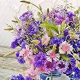 Kisshes Giardino - 50 Pezzi Semi di mix di fiordaliso Mix di fiori Farfalla e ape Mix di semi di prato Semi di perenni Hardy