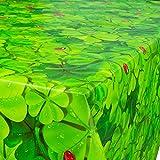 ANRO Wachstuch Wachstischdecke Tischdecke abwaschbar Glücksbringer Marienkäfer Kleeblätter 160 x 140cm