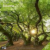 Bäume 2019, Wandkalender / Broschürenkalender im Hochformat (aufgeklappt 30x60 cm) - Geschenk-Kalender mit Monatskalendarium zum Eintragen - Ackermann Kunstverlag