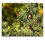 Liili Mauspad Naturkautschuk Mousepad Eibe Baum Taxus baccata im Herbst Bild-ID 23379997
