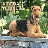Airedale Terriers 2019 - 18-Monatskalender mit freier DogDays-App (Wall-Kalender)