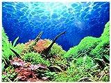 Rückwandfolie 100cm x 40 cm Rückwandposter für Aquarien