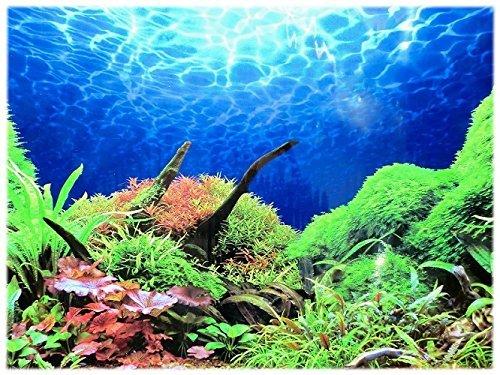 Rückwandfolie 80cm x 50 cm Rückwandposter für Aquarien