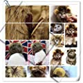 Per Realistic Pet Costume Lion Mane Wig Hat for Small Dog Cat and Puppy Kitten to Dress up
