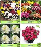 Pinkdose® Blumensamen: Outdoor-Pflanzensamen Combo Stiefmütterchen, Dahlia-Bambino, Lotus Samen, Nelkengarten Blumensamen Pack von Creativefarmer