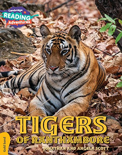 Looking for a tiger gold band