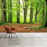 deco-deals - Papel pintado fotográfico (366 x 254 cm), diseño de bosque de hayas
