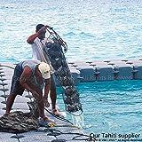 Mr. Dora 9-10mm Tahiti Perle Anhänger mit Kette aus massiv Sterlingsilber 925 Collier - 7