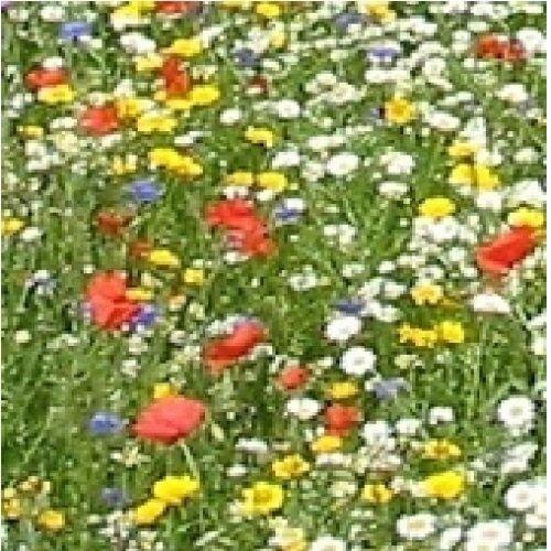 JustSeed Wirtschaft Wild Flower Mix Cornfield Annual Flower Mischung 5 g Samen