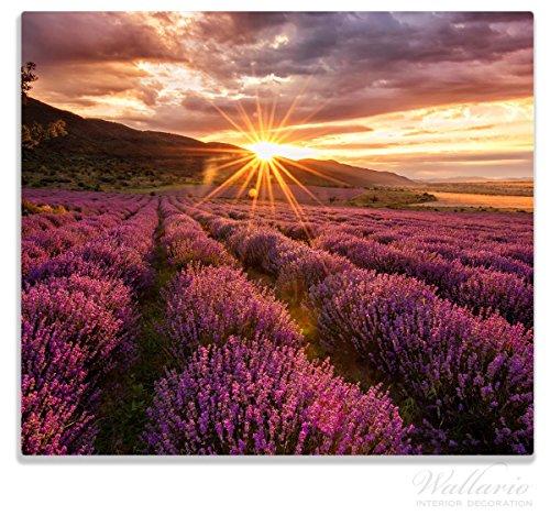 Home Ambiente Parfüm (Wallario Herdabdeckplatte / Spitzschutz aus Glas, 1-teilig, 60x52cm, für Ceran- und Induktionsherde, Lavendelfeld bei Sonnenuntergang - Sonnenstrahlen)