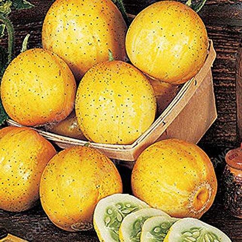 100pcs / pack Big concombre Graines rares NON-OGM délicieux concombre fruits et semences potagères pour jardin plantation de plantes Bonsai Graines Concombre