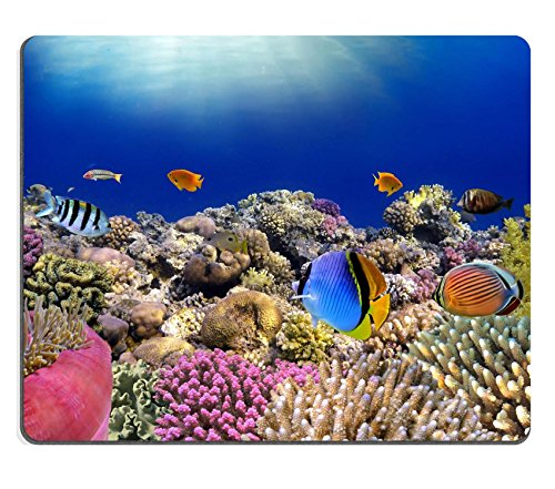 liili-mouse-pad-natural-rubber-mousepad-underwater-world-coral-fishes-of-red-sea-egypt-image-id-1470