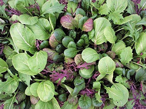 Asiagemüse Oriental Mix | Bio-Salatsamen von Reinsaat