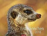 Erdmännchen - Kalender 2018