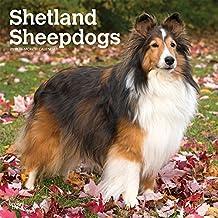 Shetland Sheepdogs - Shelties 2019 - 18-Monatskalender mit freier DogDays-App (Wall-Kalender)