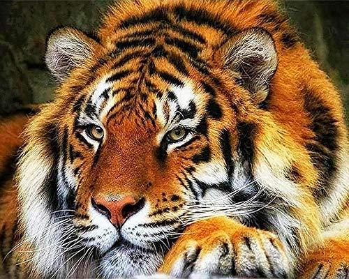Starren Tiger (zupjl Malen Nach Zahlen Malen Nach Zahlen Kits Gemälde Erwachsene Kinder DIY Ölgemälde Leinwand Starren Auf Den Fernen Tiger 40 * 50Cm)